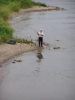 Câu Cá Sông