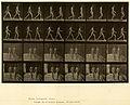Animal locomotion. Plate 12 (Boston Public Library).jpg