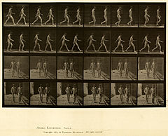 Animal locomotion. Plate 12 (Boston Public Library).jpg