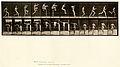 Animal locomotion. Plate 154 (Boston Public Library).jpg