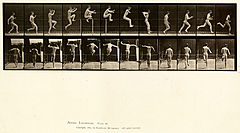 Animal locomotion. Plate 154 (Boston Public Library).jpg