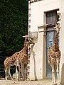 Antwerp Zoo (12210657004).jpg