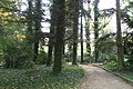 Arboretum in Kórnik kz05.jpg