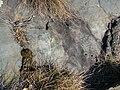 Archeo Chenal 2011 abc13.jpg