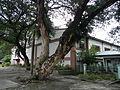 Asingan,PangasinanFGatejf7922 26.JPG