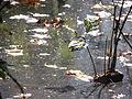 Autumn (7177559663).jpg