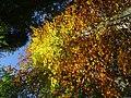 Autumn colors (15558289093).jpg