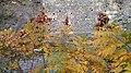 Autumn season in Butanic Garden فصل پاییز در باغ بوتانیکال تفلیس 02.jpg