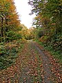 Autumnal scene in the Wyre Forest - geograph.org.uk - 1557186.jpg