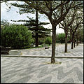 Avenida Luísa Todi, Setúbal, Portugal (3379462782).jpg