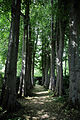 Avenue of trees Gibberd Garden Essex England.JPG
