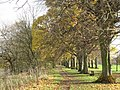 Avenue of trees on the south bank of the River Tyne - geograph.org.uk - 1073548.jpg