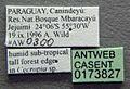 Azteca alfari casent0173827 label 1.jpg