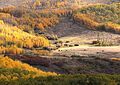 BOULDER MT, GARFIELD COUNTY, UT - 2016-09-30 fall color (5) (30311176832).jpg