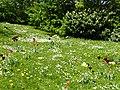 Bad Sassendorf – Kurpark - Blumenwiese am Thermalbad - panoramio - giggel.jpg