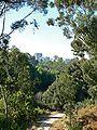 Balboa Park city view 1.jpg