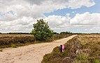 Balloërveld, natuurgebied in Drenthe 013.jpg