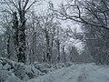 Baneasa winter (2418134869).jpg