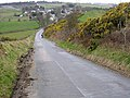 Bank of Gorse on Road to Mollinsburn - geograph.org.uk - 152979.jpg
