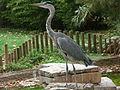 Barcelona-Zoo-Garza real (Ardea cinerea).jpg