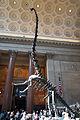 Barosaurus AMNH lobby.jpg