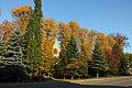 Bartoszyce. Jesienne drzewa przy ulicy Kętrzyńskiej. - panoramio.jpg
