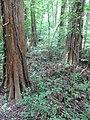 Battle Creek Cypress Swamp 15.jpg