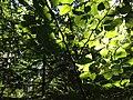 Bayrischer Wald - Umgebung St. Oswald Riedlhütte (3).JPG