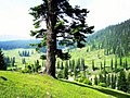 Beautiful-kashmir-picture.jpg
