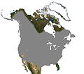 Beaver North America Range.jpg