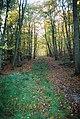 Beech wood, Ashley Hill - geograph.org.uk - 82542.jpg
