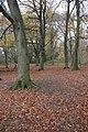 Beech woodland, Crickley Hill - geograph.org.uk - 622140.jpg