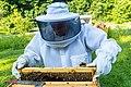 Beekeeper Tending to Bees.jpg