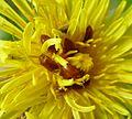 Beetles - Flickr - gailhampshire.jpg