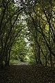 Belgium Steenmolenvoetweg (22731493836).jpg