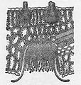 Berberis vulgaris et Puccinia graminis, Bernard.jpg