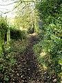 Between the hedges - geograph.org.uk - 2174723.jpg