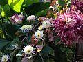 Binh's Garden (11107267866).jpg