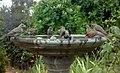 Bird Bath (9130268415).jpg
