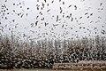 Bird Of Passage (65717351).jpeg