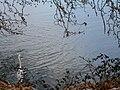 Bird in Kastoria lake.jpg