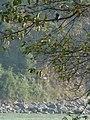 Bird in the tree (5290681734).jpg