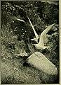 Bird notes (1913) (14749758132).jpg