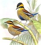 Изображение двух птиц с желто-черными полосатыми головами, коричневой спиной и желтой нижней стороной с черными полосами, сидящих на ветвях.