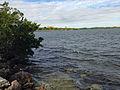 Biscayne Bay from trail.JPG
