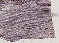 Blatta orientalis (YPM IZ 098933).jpeg
