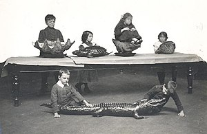 Blindness and education - Children from the Sunderland Council Blind School using touch to identify different creatures at Sunderland Museum, 1910s.