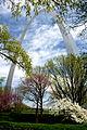 Blooms around the Arch (5616787859).jpg
