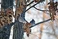 Blue Jays at Necedah National Willdife Refuge in Wisconsin (32077516705).jpg