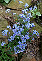 Blue flowers in the wall.jpg